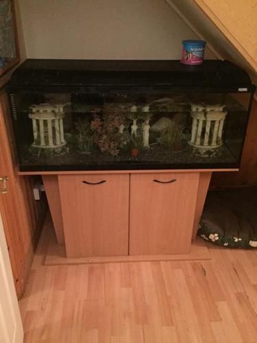 4ft fluval fish tank complete setup!!