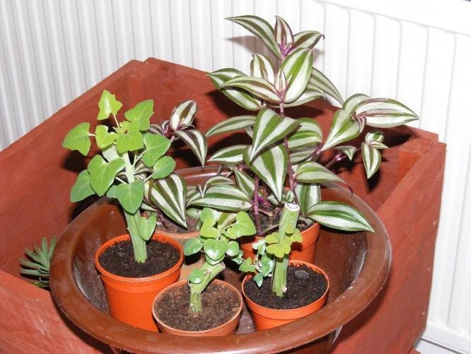 5 house plants, asstd.