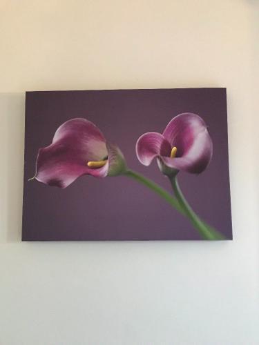 Canvas - Purple Dove Arum Lily
