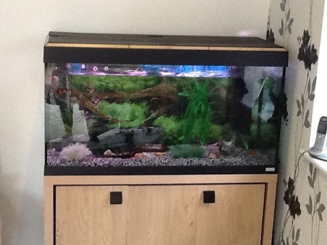 Fluval Roma 200 Aquarium with oak cabinet.