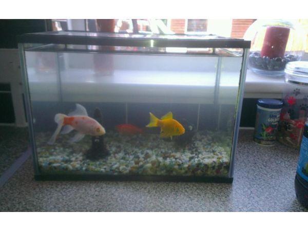 Free fish and tank