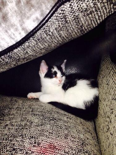 Kittens for sale! Only 2 left!