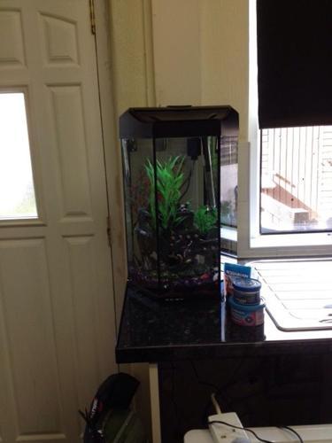 Prism aquarium