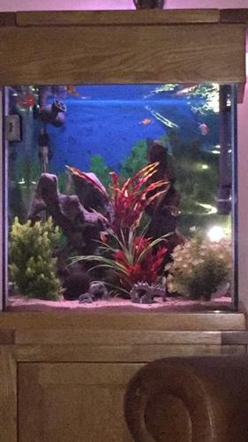 Solid Oak aquarium 155l