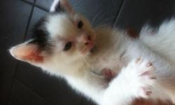 For sale 6 beautiful kittens, looking for their loving forever homes, 3
