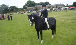 Black gelding excels in dressage and is always placed
