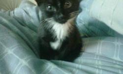 3 FEMALE KITTENS, 2 BLACK AND WHITE, 1 GREY ,READY TO
