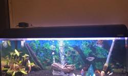 I have a 4ft tank with a background black gravel fluval