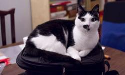 Five year old black and white cat seeks new home. She's