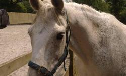 Fun loving and cheeky family pony available for full
