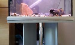 All great condition 36 litre aquarium fish tank with
