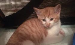 3 beautiful kittens for sale, they have been wormed and