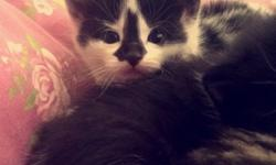 3 lovely kittens ready for fun loving homes! 1 boy and