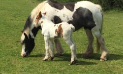 Lovely mare and foal, mare is breed good gd body gd
