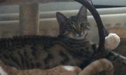 My cat Ozzy is a 18 month old male Savannah (neutered)