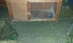 Up for sale is a boy rabbit with indoor cage £15 or
