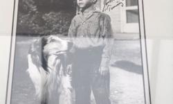 Realy nice photo of lassie and Timmy it's signed by the